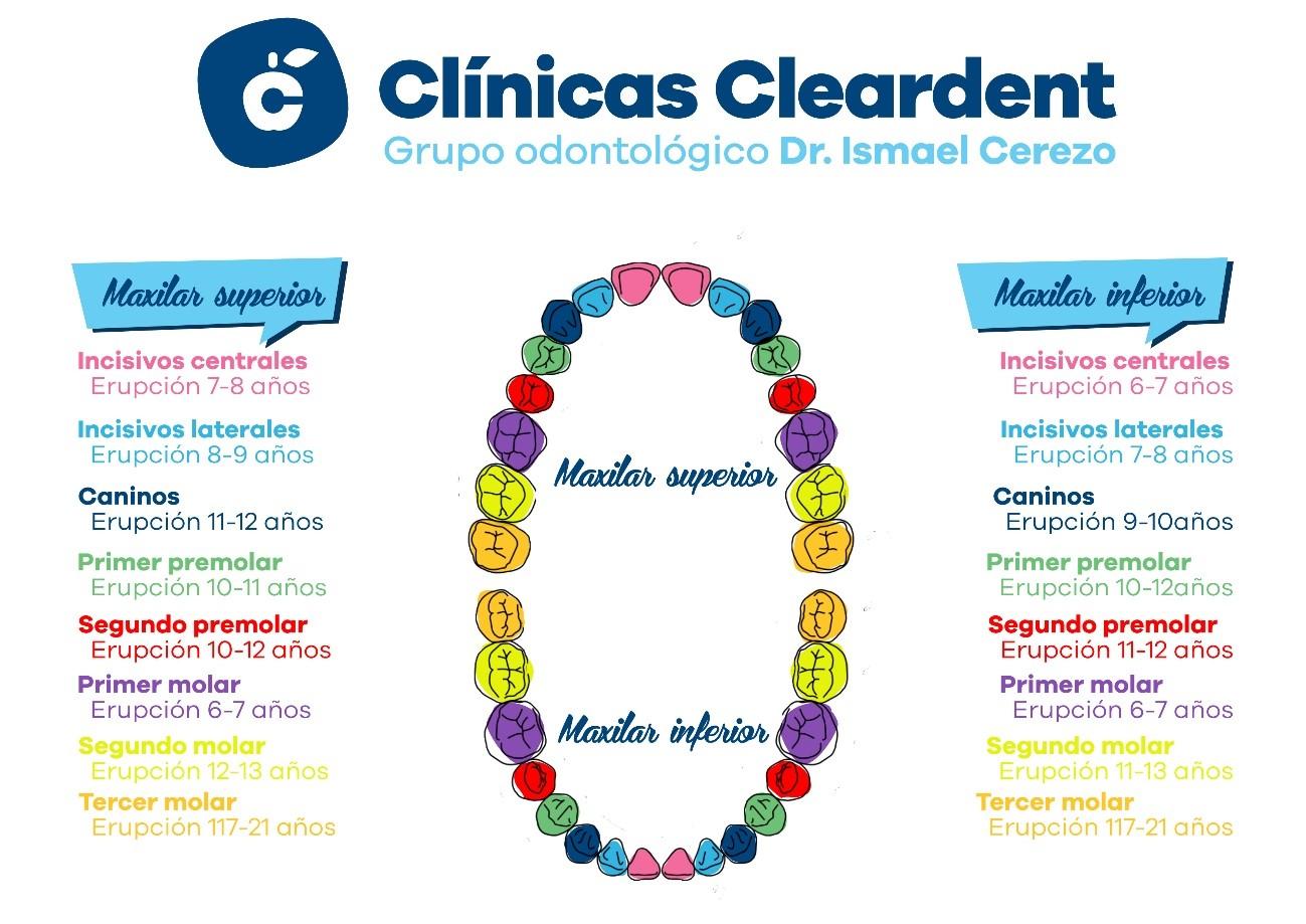 Ortodoncia infantil, todo lo que necesitas saber. 4