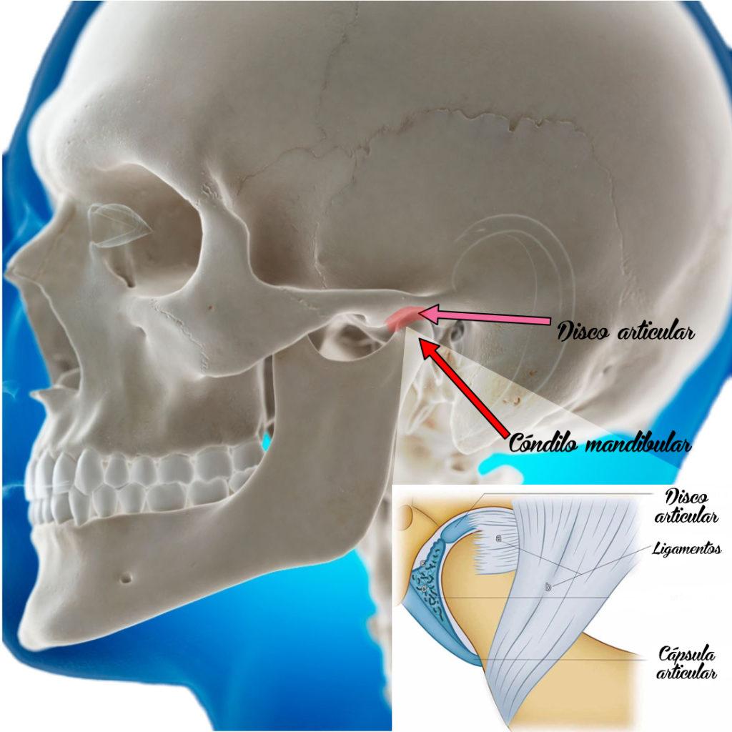 Articulación temporomandibular,  problemas de ATM 3